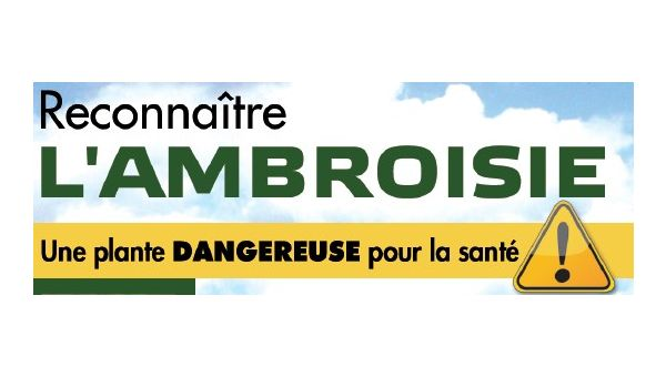 AMBROISIE INFORMATIONS